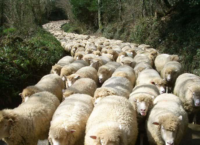 A Cornish traffic jam