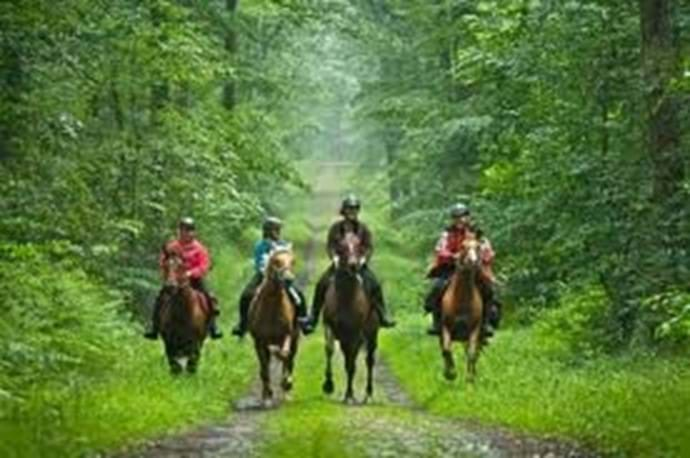 Horse riding (within minutes from the villa) Enjoy a ride whether you are experienced rider or a complete novice.