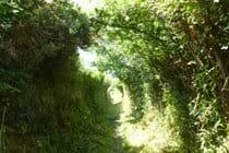 Gorgeous Lanes Around St Agnes