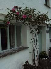 Roses over the front door