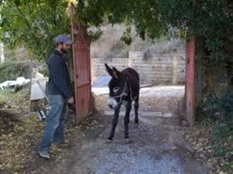 Baby donkey Serra da Monchique