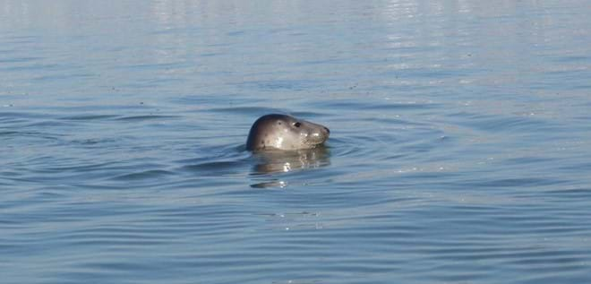 Sammy the Seal who lives just outside the boathouse just call his name & he pops up to see you lol