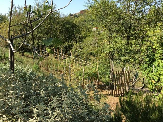 The orto/vegetable patch