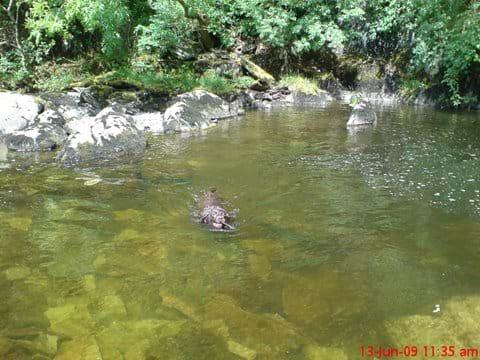 Enjoying a swim on the Waterfall Walk