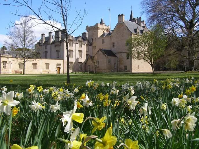 Brodie castle daffodils