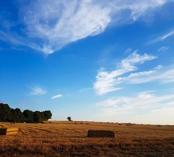 Tranquil fields around Fonsegre