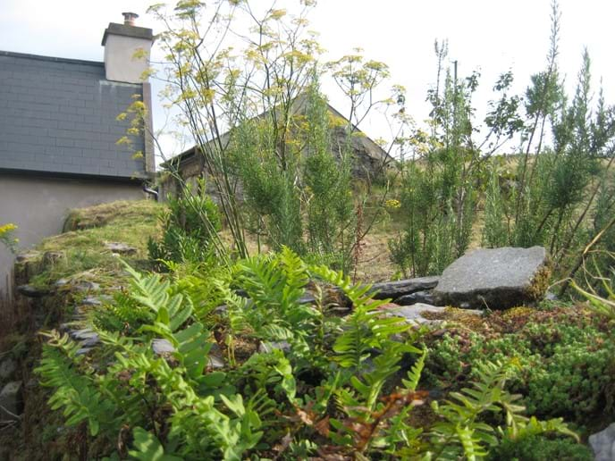 A view of the rear of the Cottage. We are dog friendly and welcome up to 2 well behaved dogs by prior arrangement.
