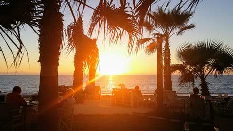 sun setting over the ocean through the palm trees