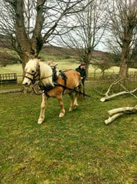 Sustainable, low impact logging with our working horse, Nebol
