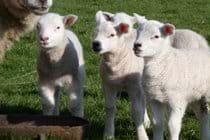 What! ewe looking at me?