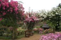 The Rose Garden at Lassay-les-Chateaux