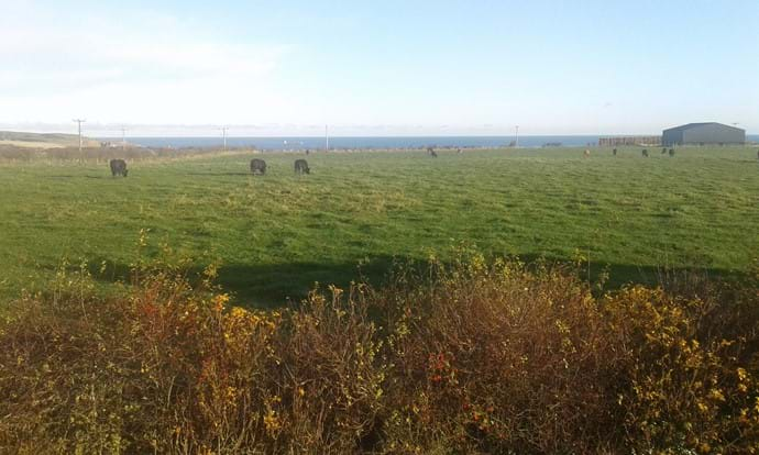 Countryside , Cows, the Sea and Ships all in the same Cottage View