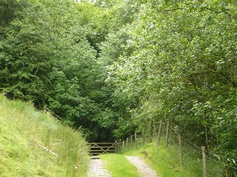 Walks from the doorstep (Springs Wood)