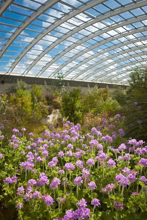 The Glass House at National Botanic gardens