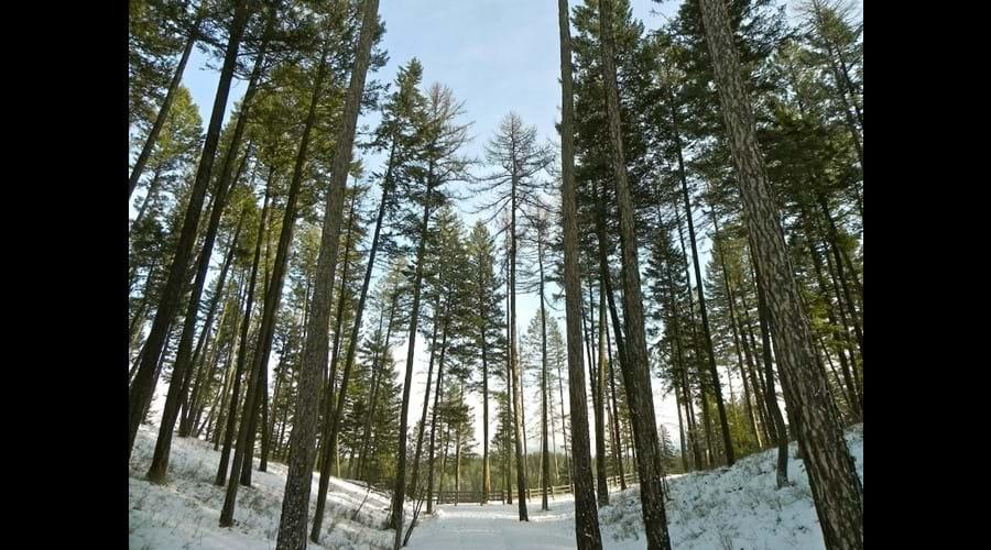 Mystic Mountain Retreat trees