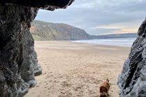 Ruby exploring Penbryn National Trust Beach...