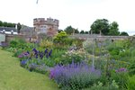 herbaceous border at Dirleton Castle