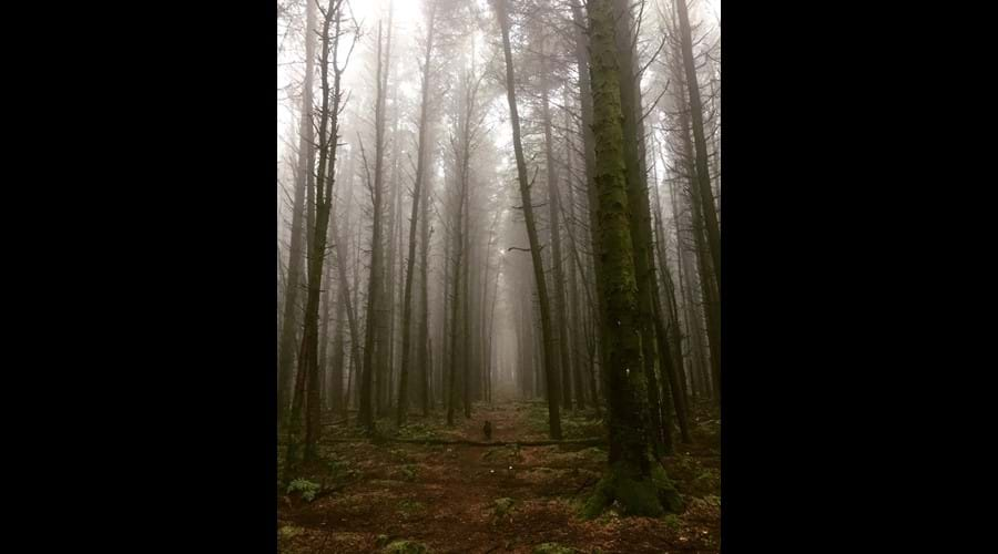 Misty walk through Chibannagh plantation