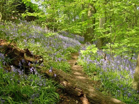 Friends of Gledhow Valley Woods