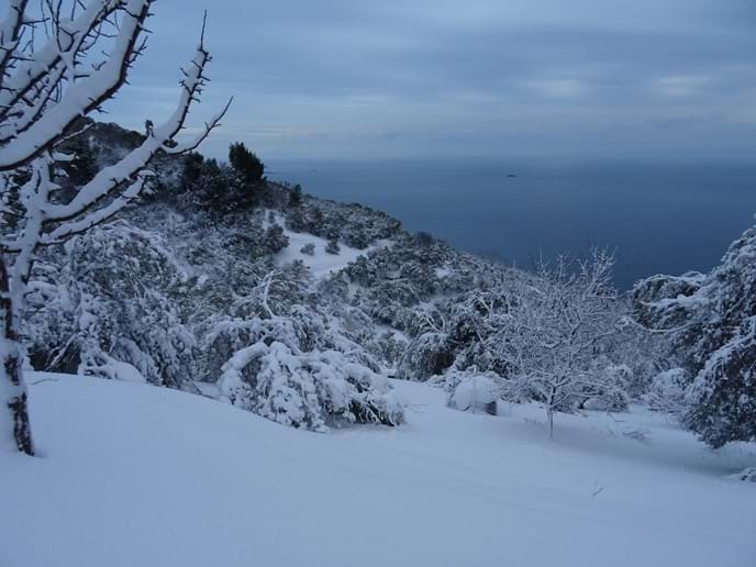 Jan 2017 - Skopelos received its heaviest snowfall in thirty years. We found it quite fun and exciting but not everybody had a good time. Lots of branches have broken off olive trees and also trees in the forest, but for a while it was so pretty!