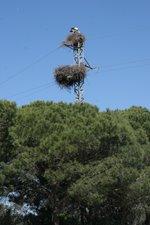 Birds love to nest in strange places
