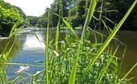 River Teffi