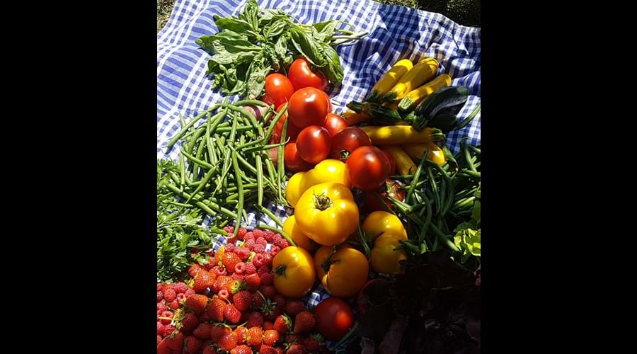 Rich pickings from our nearby organic