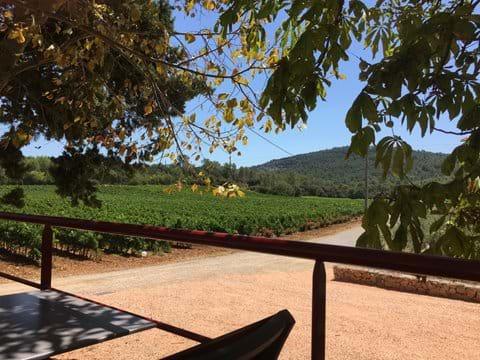 The vineyard that processes our grapes - Sainte Croix La Manuelle