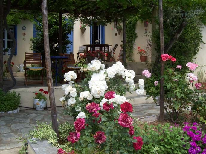 Orchard Villa Courtyard - roses in May