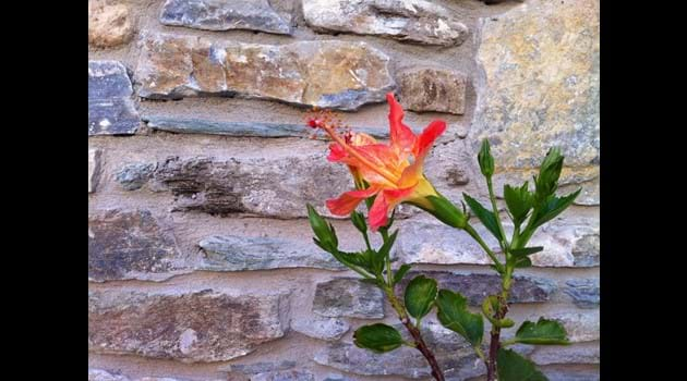 Ionia house stone walls in Spring