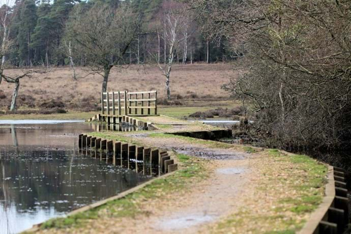 New Forest footpath