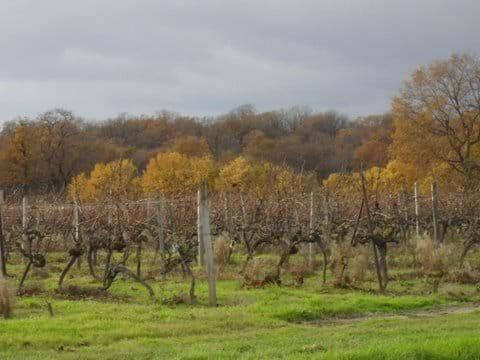Vines and woodlands at La Gachere