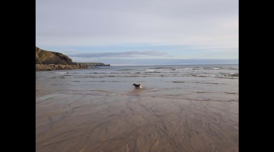 Dog friendly beaches nearby