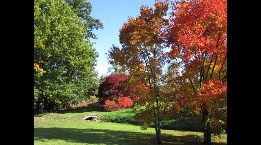 The rear garden in the autumn