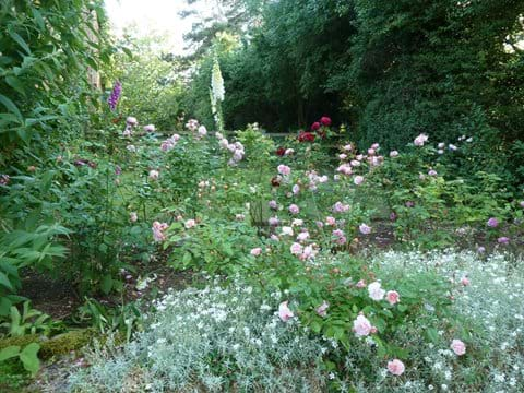 Summer roses at the entrance gate