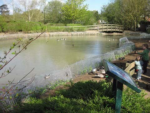 Pond remodelled with sloping edges after the April 2011 planting