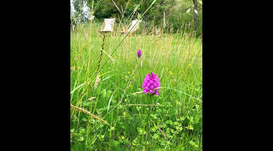 Wild orchids growing in the garden