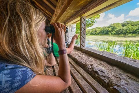 Watch wildlife at Cors Caron Nature Reserve