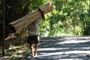 Een dorpsgenoot opweg met zijn bamboe-oogst
