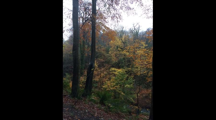 Autumnal colours in Molly Quirk's Glen, Onchan