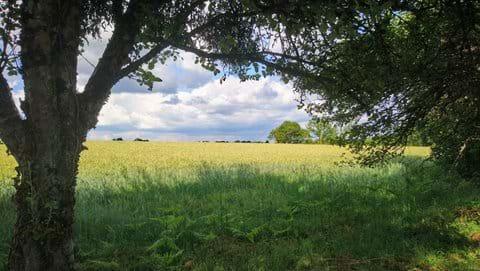 Fields nearby Mialet