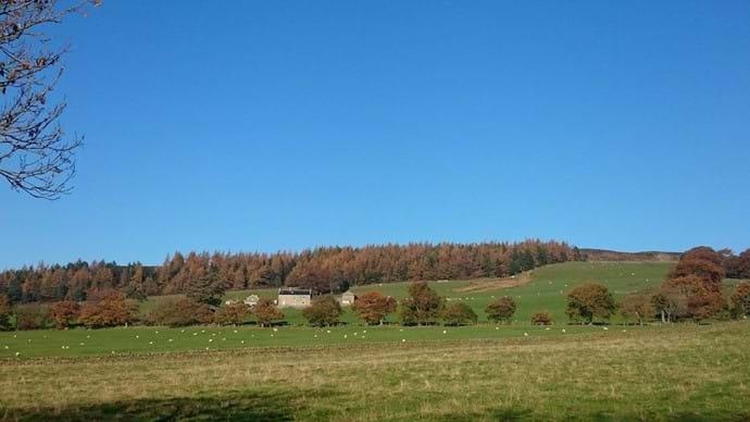 Laverock Hall Farm