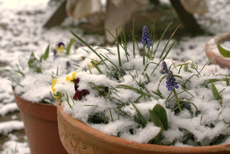 Spring snow in my Normandy garden