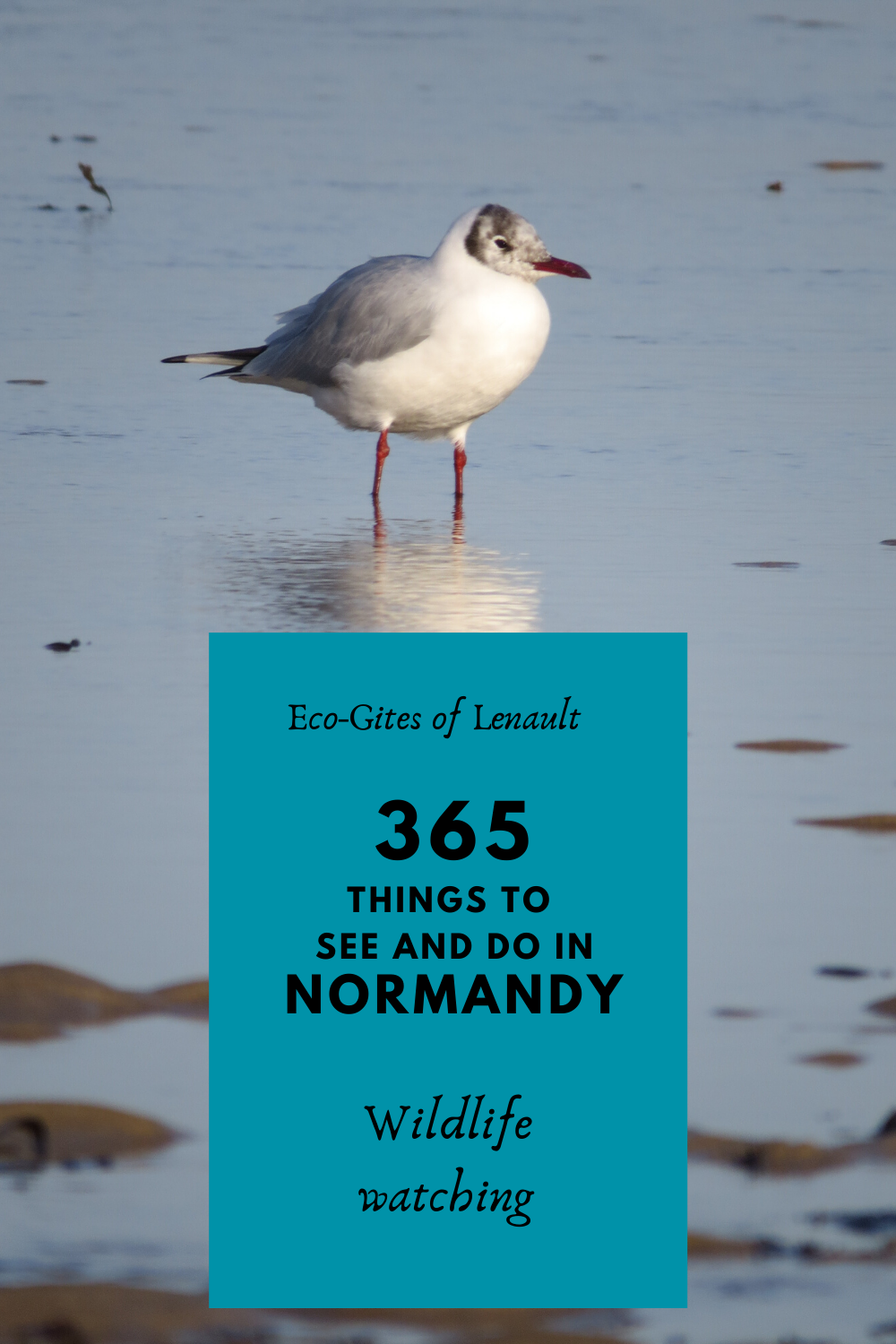 Where to see wildlife in Normandy