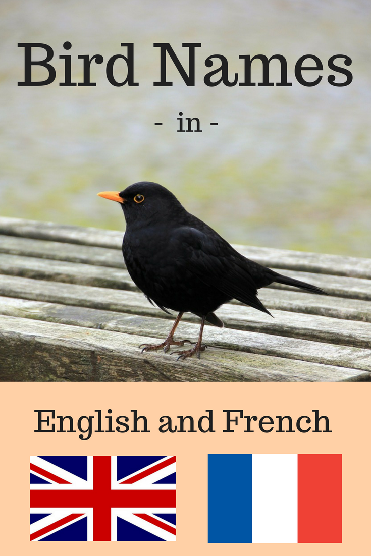 Bird names in English and French