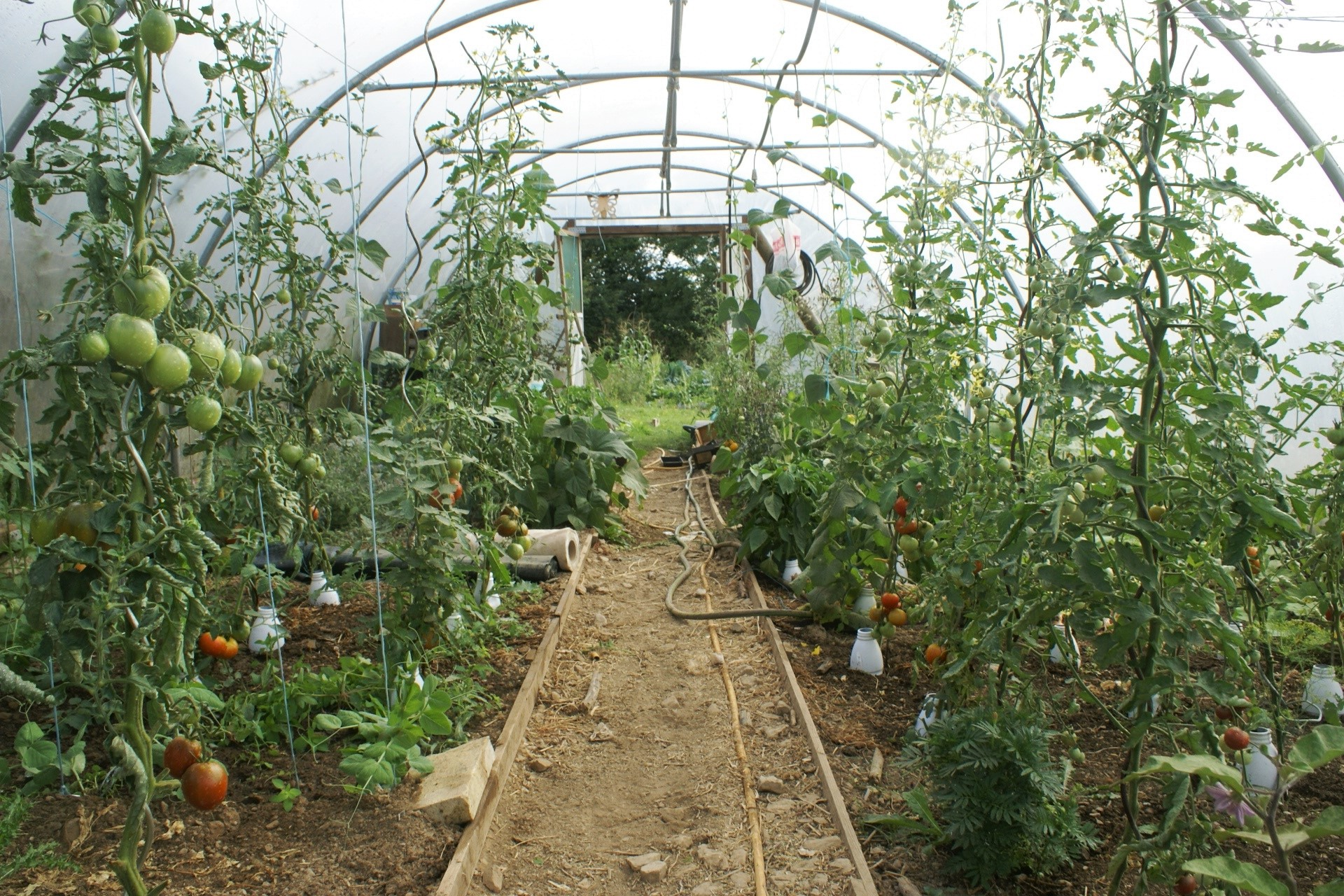 My Normandy Polytunnel