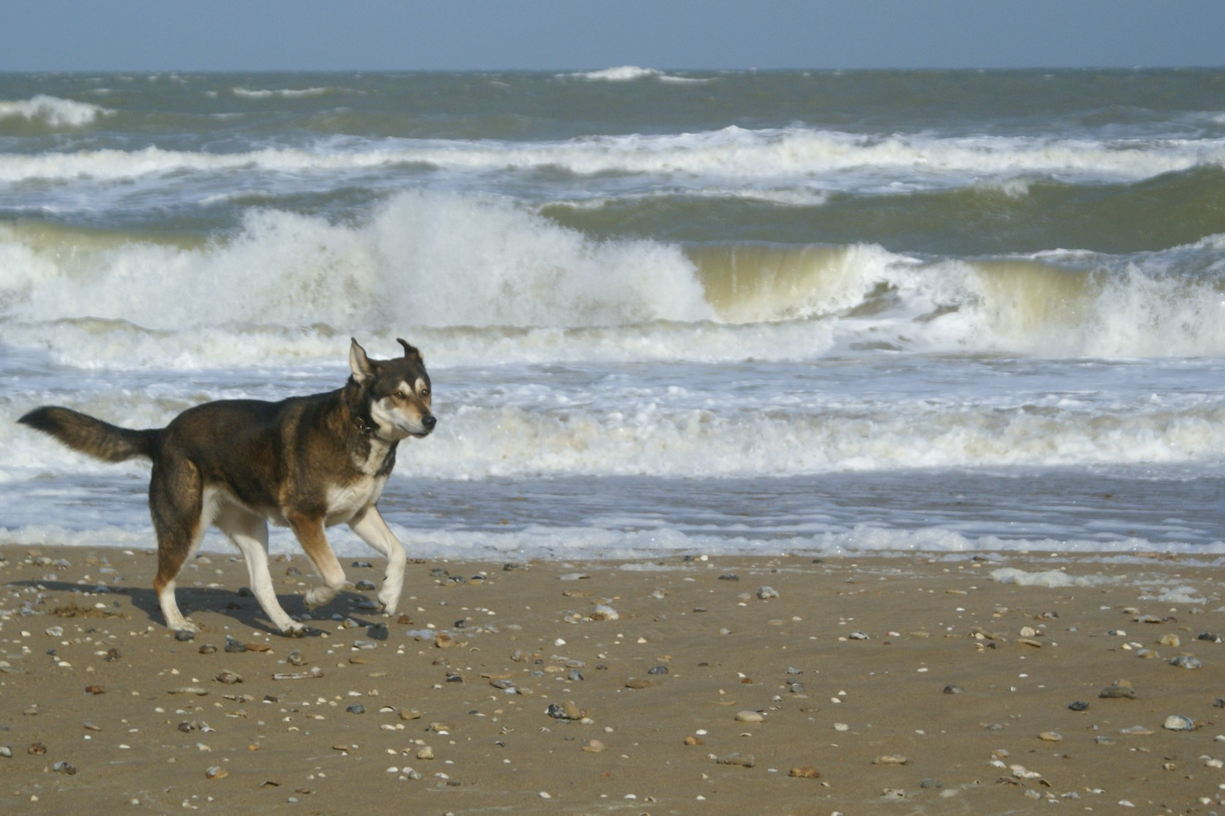 Dog friendly beaches in Normandy