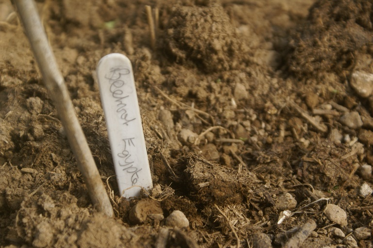 Seed sowing at Eco-Gites of Lenault