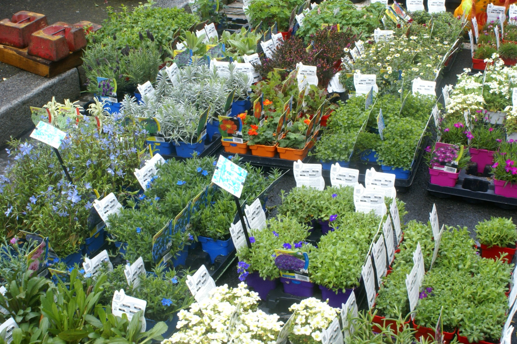 Plants for sale at a Normandy market
