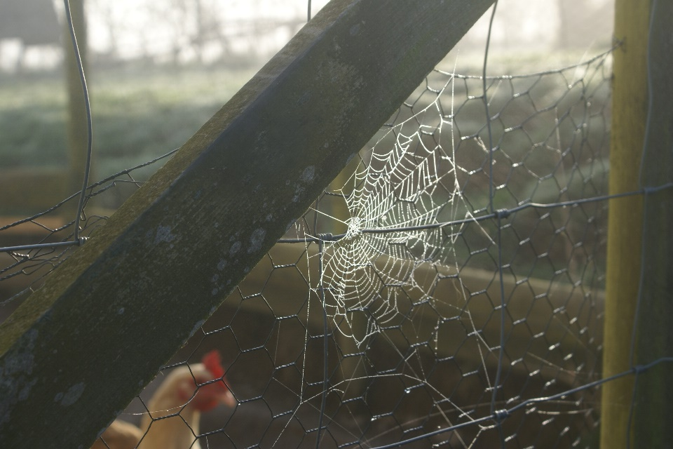 Autumn cobweb at Eco-Gites of Lenault, Normandy